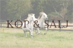 Köp & Sälj